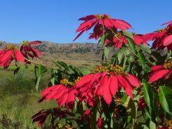 Madagascar - Jardin de l'hôtel Isalo Ranch