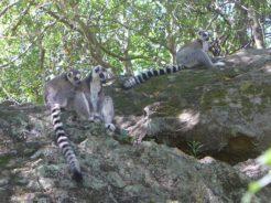 Les visites dans la région de l'Isalo